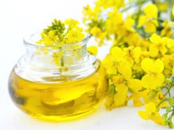 14146 - Refined Rapeseed Oil Europe